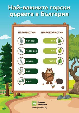 Най-важните горски дървета в България